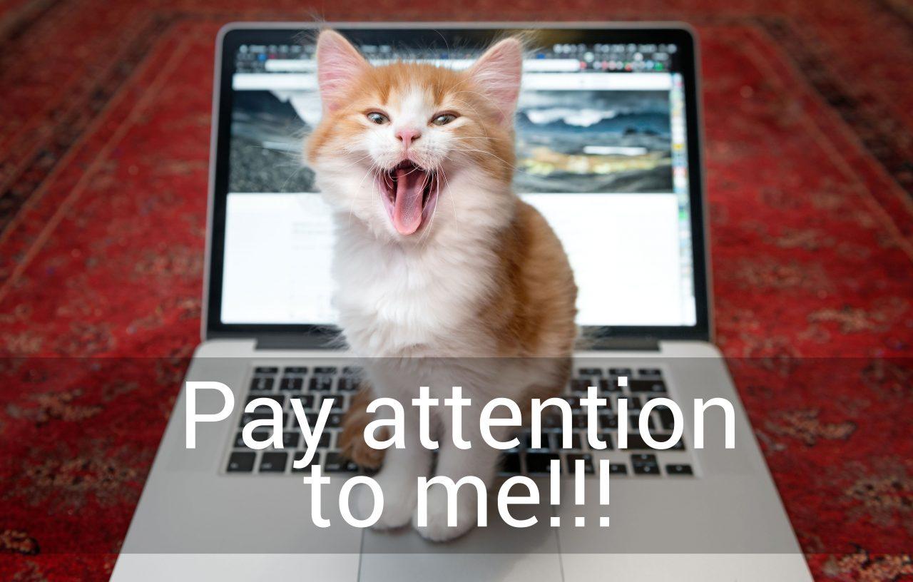 Kitten on keyboard yelling.