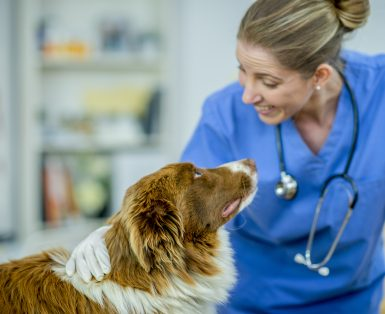 Female vet with a sheep dog